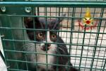 Gattino bloccato in un sacco, pompieri di Messina lo salvano e gli trovano una casa - FOTO