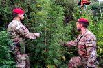 Cosoleto, carabinieri trovano 100 chili di marijuana