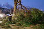 Messina, albero caduto su viale Regina Elena: le operazioni dei vigili VIDEO