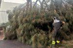 Messina, cade un grosso ramo di un albero sul viale Regina Elena: traffico in tilt FOTO