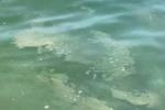 A Pizzo un mare... di vergogna. L'indignazione di turisti e commercianti - VIDEO