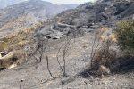 Disastro incendi, viaggio nell'apocalisse dell'Aspromonte. La disperazione dei famigliari delle vittime e degli agricoltori FOTO | VIDEO