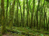 Alla scoperta dell'Irlanda nel segno della sostenibilità