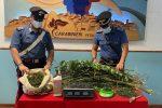 Petronà, beccato a coltivare marijuana nel suo terreno. In manette un 24enne