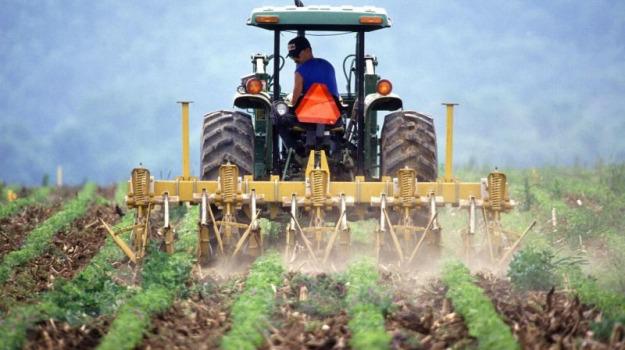 agricoltura, calabria, Pnrr, Paolo Parentela, Calabria, Economia