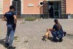 Cucciolo in fuga dagli incendi si rifugia nel commissariato di Librino (Catania)
