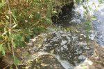 """Un mare di liquami nel fiume Corace, Arpacal conferma: """"E' fogna!"""""""