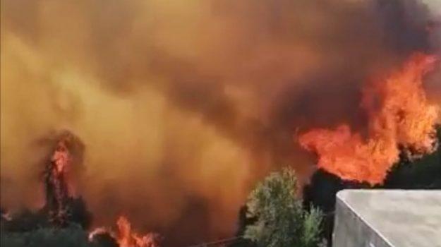 Incendi in Calabria: nelle ultime 12 ore 65 interventi tra Cosenza, Reggio e Crotone