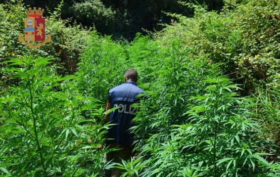 Sequestrata una serra di marijuana a Roma, arrestato un 53enne di Catanzaro