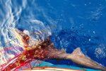 Lipari, i pescatori liberano uno squalo intrappolato in una rete