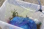 Cassano allo Ionio, decine di multe per pesca illegale di granchi nel Canale degli Stombi