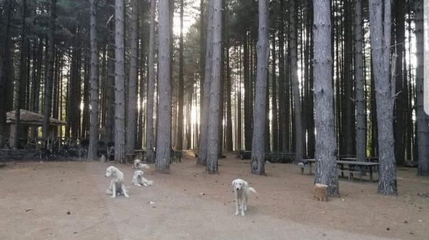 branco cani, satriano, ventenne uccisa, Simona Cavallaro, Calabria, Cronaca