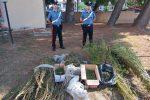 Isola Capo Rizzuto, sorpresi a coltivare droga per un valore di 50mila euro. Due arresti