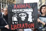 Gli eurodeputati esortano a mettere fine a sperimentazione animale