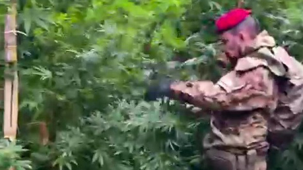 carabinieri, droga, mammola, Reggio, Cronaca