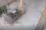 """La vergogna """"invisibile"""" del rione Taormina, dove i bimbi messinesi giocano tra i topi VIDEO"""