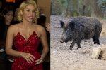 Disavventura per Shakira, attaccata da cinghiali a Barcellona con il figlio Milan