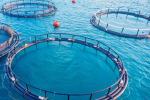 Acquacoltura, trend positivo e attenzione alla sostenibilità