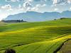 Agricoltura, nel 2020 prezzo terreni stazionario e compravendite -8,4%
