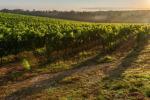 Al via AgriFormChianti per aspiranti contadini in Toscana