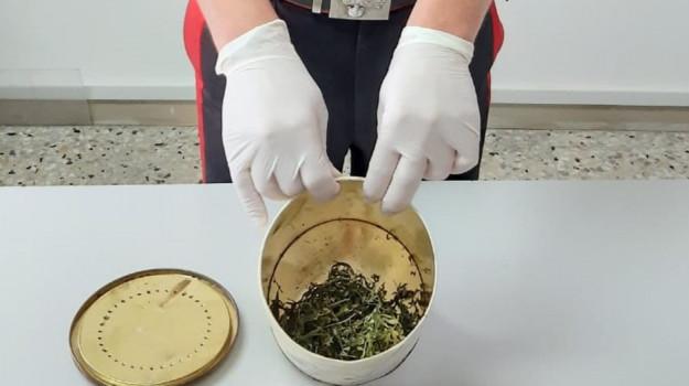 cosenza, droga, rogliano, Sicilia, Archivio