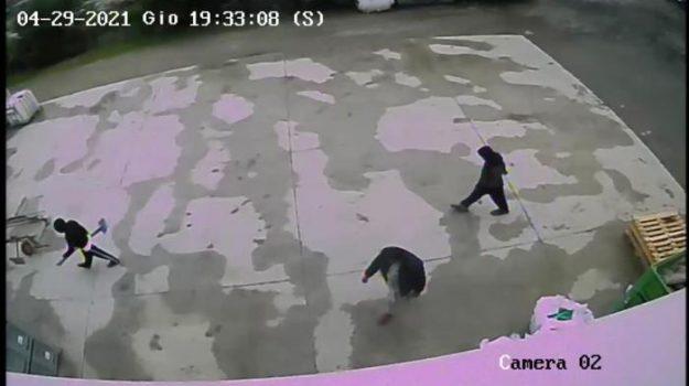 omicidio saman abbas, parigi, Danish Hasnain, Saman Abbas, Sicilia, Cronaca
