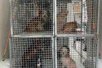 Orrore a Crotone, cani come in un lager: sequestrati e maltrattati in un appartamento FOTO