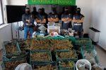Crotone, scoperto laboratorio della droga: sequestrati 40 chili di marijuana VIDEO