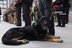 """Droga a Tiriolo, il fiuto del cane """"Manco"""" costa caro a un 28enne: arrestato"""