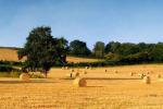 Agricoltura, dal ministero 36 mln per il contratto distretto Toscana Sud
