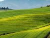 Agricoltura, dalla Regione Emilia Romagna 8mln di risorse straordinarie