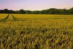 Agricoltura in Toscana, bandi per biologico e coltivazioni aree montane