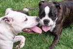 Anziana muore sbranata dai cani, indagata la badante