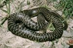 Bagnara Calabra: un serpente avvistato nel centro del paese