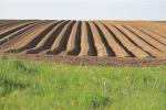 """Contratto agricoltura, Uila """"Una proposta che guarda al futuro"""""""