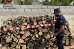 Montalto Uffugo, 4 denunce per appropriazione indebita di legname da bosco comunale