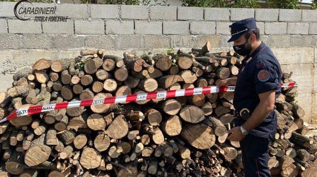 denunce, legna, montalto, Cosenza, Cronaca