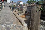 """Taglio """"fuori legge"""" dei cipressi al cimitero di Caloveto, denunciato il responsabile dell'ufficio tecnico comunale"""